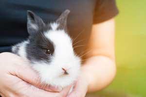 Best Water Bottle for Rabbits
