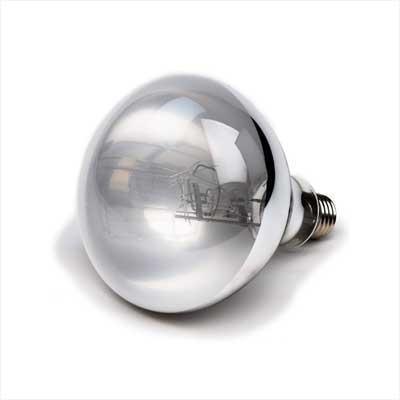 Evergreen Pet Supplies 100 Watt UVA UVB Mercury Vapor Bulb