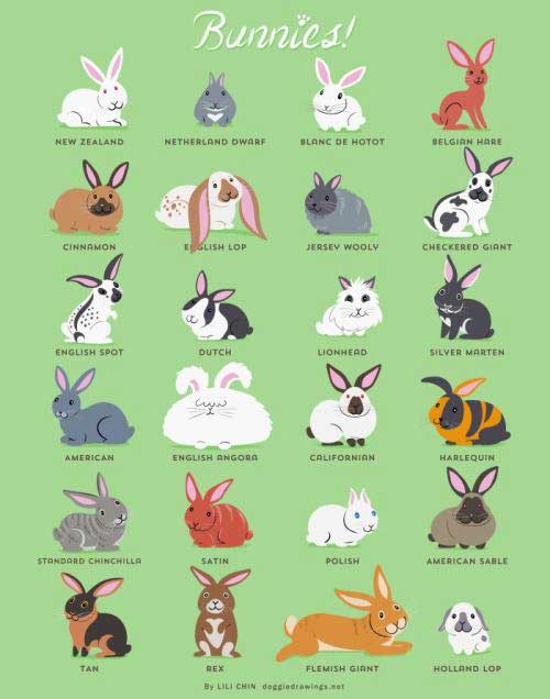 More bunny breeds