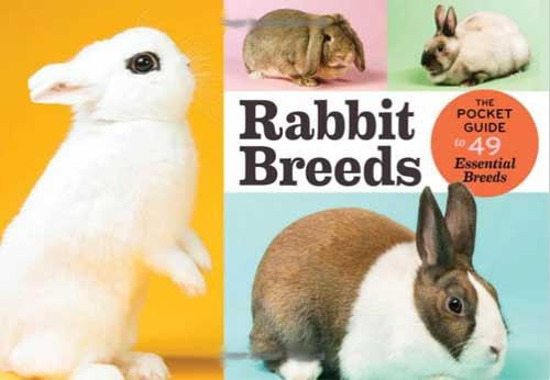 Rabbit Breeds The Pocket Guide to 49 Essential Breeds