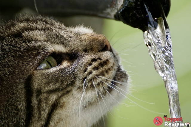 5 Best Cat Water Fountain Options to Browse Through