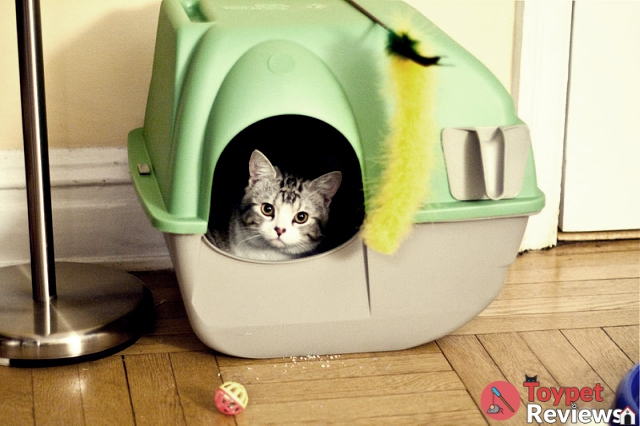 5 Best Cat Litter Boxes + Tips on Finding the Best One