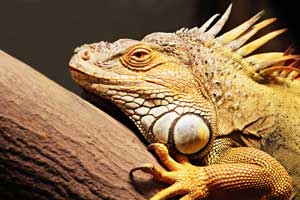 Best Heat Lamp For Iguanas 10 Products Reviewed Toy Pet Reviews