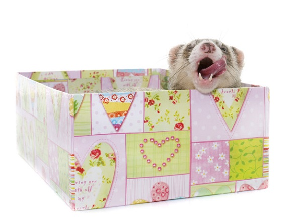 Best Bedding for Ferrets: 10 Top-Selling Products Reviewed