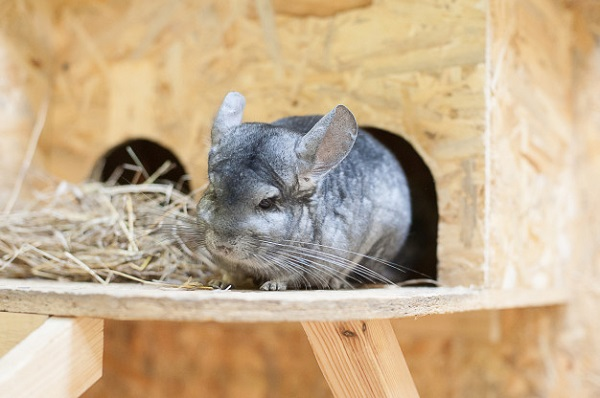 Best Chinchilla Hay: 10 Products Reviewed
