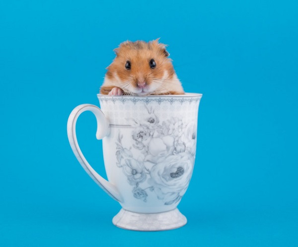 10 Best Hamster Toys and Accessories