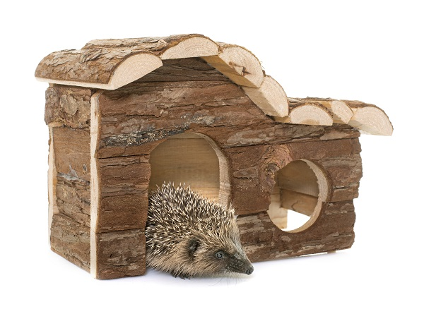 Best Hedgehog Houses to Keep Your Pet Happy and Comfortable