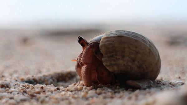 Best Hermit Crab Habitat