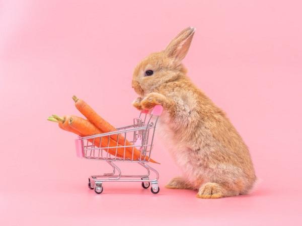 best rabbit treats