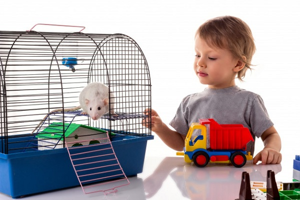 Best Rat Cages: 10 Products Ranked and Reviewed