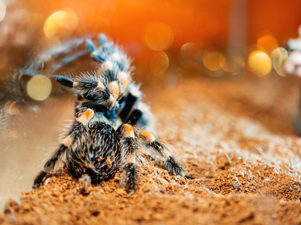 Best Substrate for Tarantulas: 10 Products Reviewed