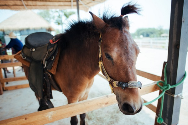 Best Weight Gain Supplement Horses Need to Keep Their Weight Up