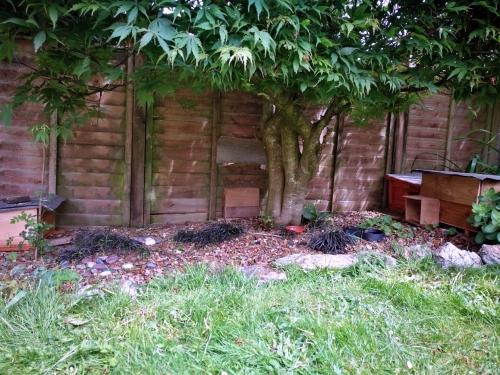 hedgehog houses garden