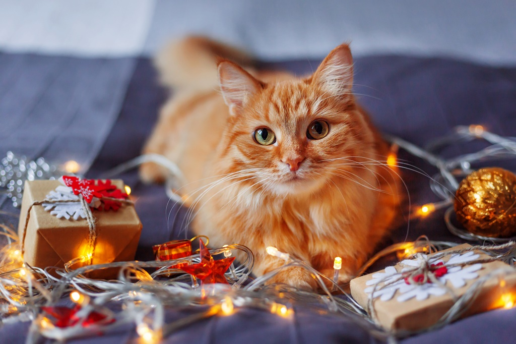 Cute ginger cat lying in bed with shining light bulbs and New Ye