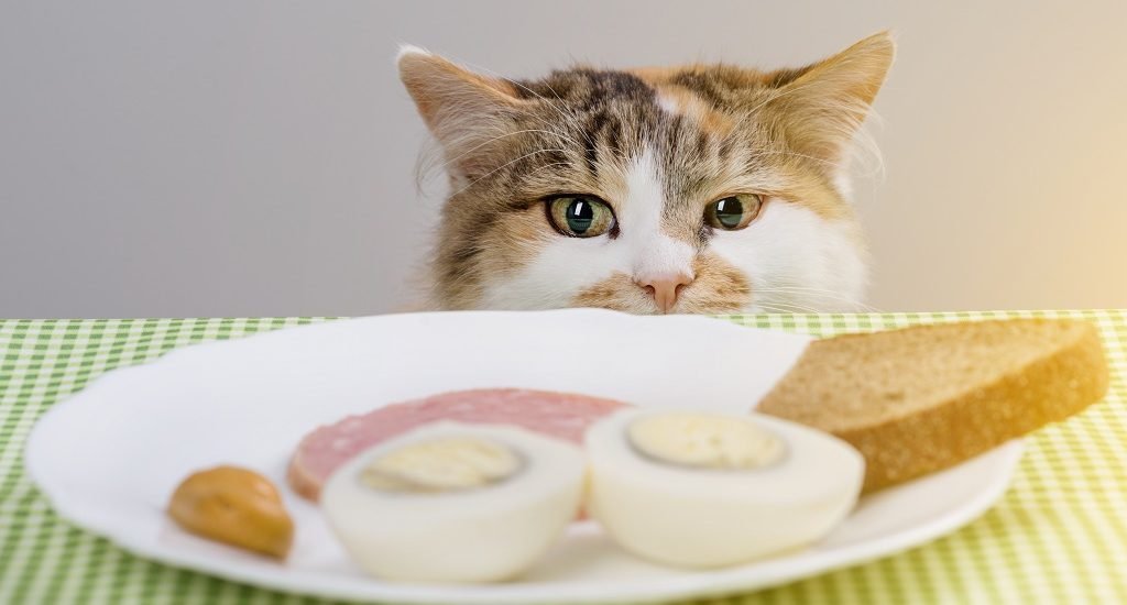 Hungry cat about to steal sausage from the table