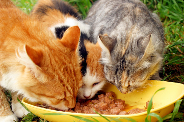 Three cats eating from same bowl